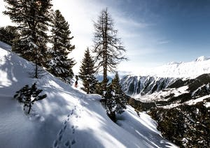 Whistler blackcomb snowshoe trail