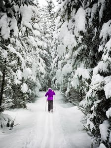 A woman on nordic trails in Whistler