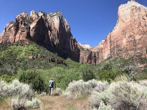 a person standing in front of a canyon with Zion National Park in the background