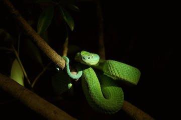 snake in serpentarium