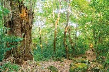 rincon de la vieja forest