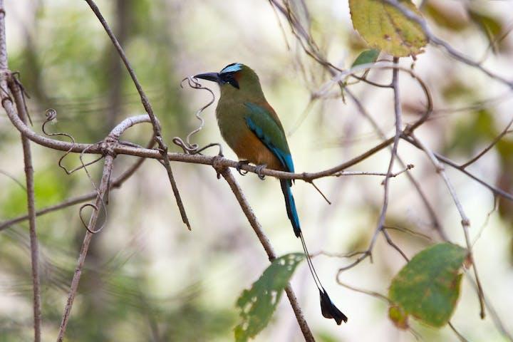 Silvester birds