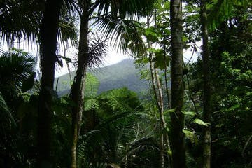 A view of El Yunque forest through some trees