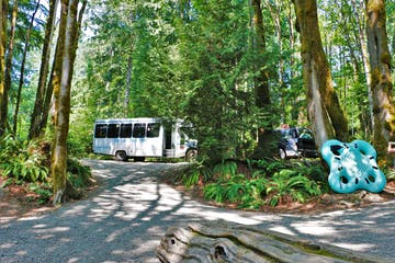 Tube Shack shuttle in the mossy trees
