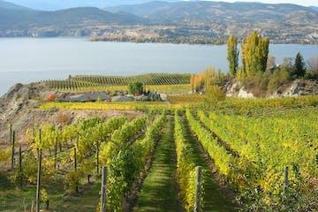 Naramata vineyard in BC, Canada