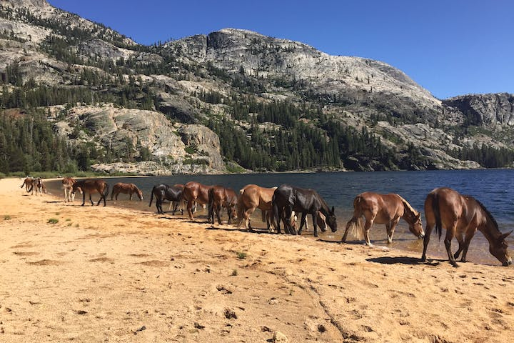 horses in a line drinking out of lake