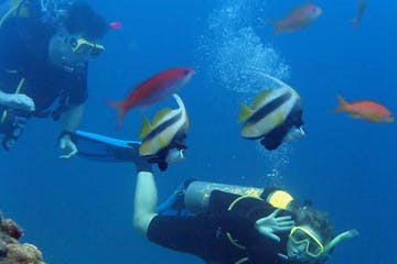 Scuba Divers near a school of fish