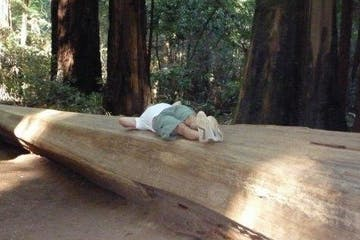 a wooden bench sitting next to a tree