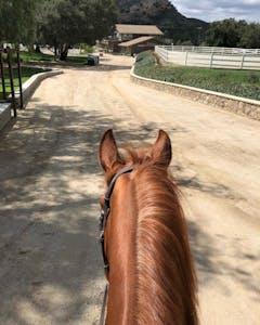 a brown horse down a dirt road