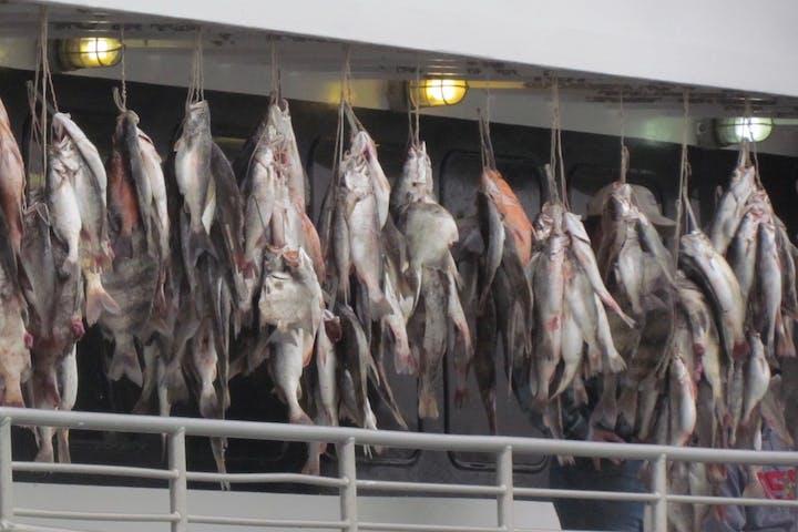 fishing hanging on boat