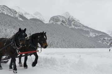 Sleigh ride, Lake Louise
