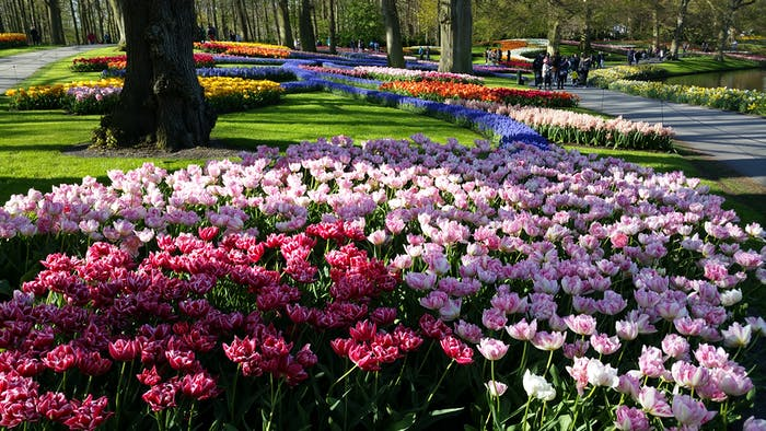 Gardening Group: Keukenhof Gardens And Tulip Fields Tour With That Dam Guide