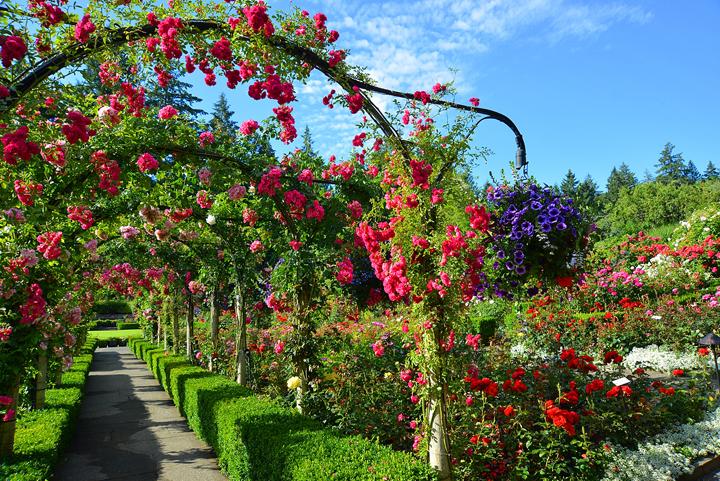 Summer at Butchart Gardens