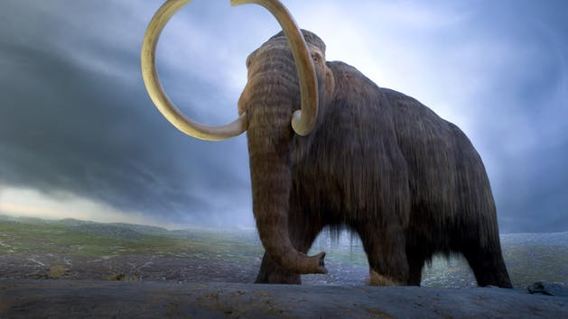 Woolly Mammoth at the Royal British Columbia Museum
