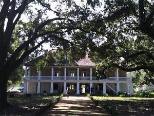 a tree in front of a house with Melrose Plantation in the background