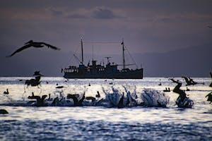 MV Westward in the Sea of Cortez