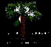 swamp cabbage logo