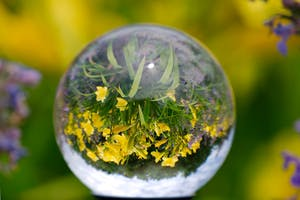 Photographing flowers using a Crystal Ball