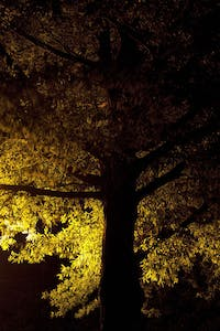 Using streetlights to photograph trees