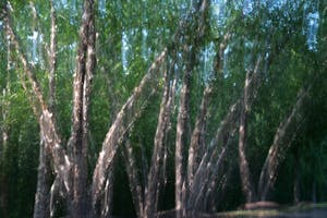 intentional camera movement of grove of trees