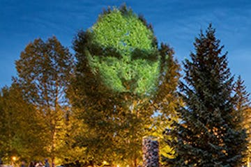 Artist portrait projected into the tree