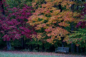 Fall Foliage Gunston Hall