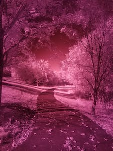 unprocessed infrared image of a path and trees