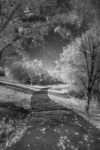 processed infrared image of a path and trees