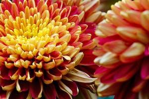 a close up of a flower