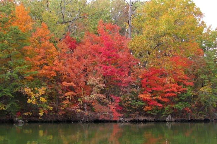Cave bluff during autumn near Sturgeon Bay, Wisconsin