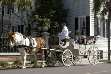 daytime group tour with brown and white horse and carriage