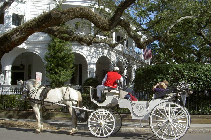 white horse pulling carriage in the street