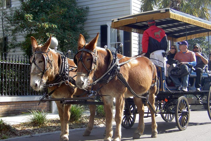 brown mules pulling a carriage group tour