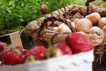 Radeln durch Dörfer und Wiesen zum Biohof. Führung des Biobauern über seinen Hof. Wissenswertes zum Bioanbau, zu Pflanzen- und Erdlebendigkeit. Zum Abschluss: ein frischgebackener Erdbeerkuchen und Kaffee.