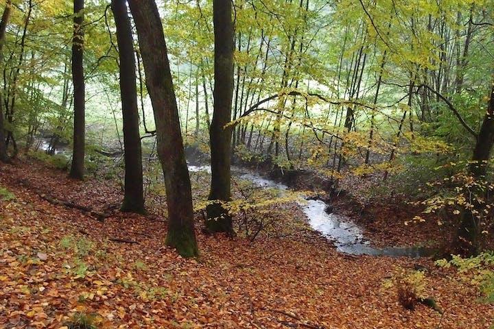 Ein Bach in einem Wald