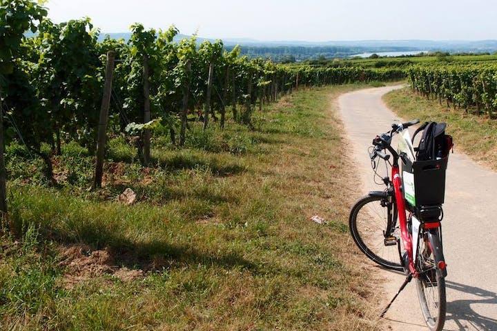 Abgestelltes Fahrrad in den Weinbergen