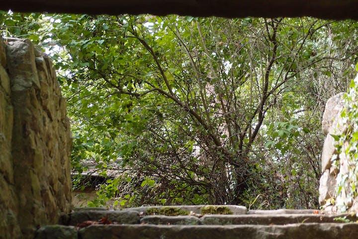 Bäume in der Natur