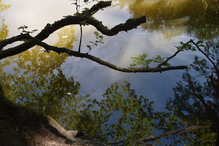 Zweige an einem Flussufer