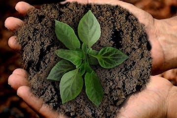 Kleine Pflanze mit vereinzelten Blättern