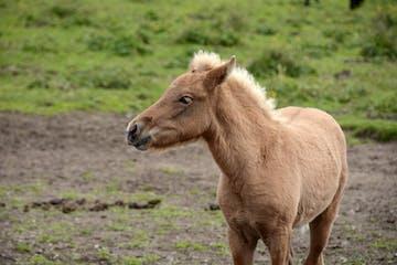 Pferde spiegeln uns Menschen in ihrem Verhalten wider. Gemeinsam mit erfahrenen Führern und Islandpferden sind wir auf einer besonderen Wanderung unterwegs.