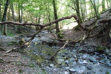 Sportliche Naturerlebnis-Tour und Naturerlebnisaktivität auf dem neuen Wisper Trail im Taunus auf wildromantischen Wegen durch wilde und idyllische Landschaft in unberührter Natur
