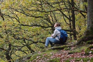Wanderung mit Achtsamkeit und allen Sinnen. Durch Eintauchen in die heilsame Atmosphäre des Waldes wird Stress abgebaut und das Immunsystem sowie körpereigene Regenerationsprozesse angeregt. Sie stärken das Herz und erleichtern psychische Belastungen.
