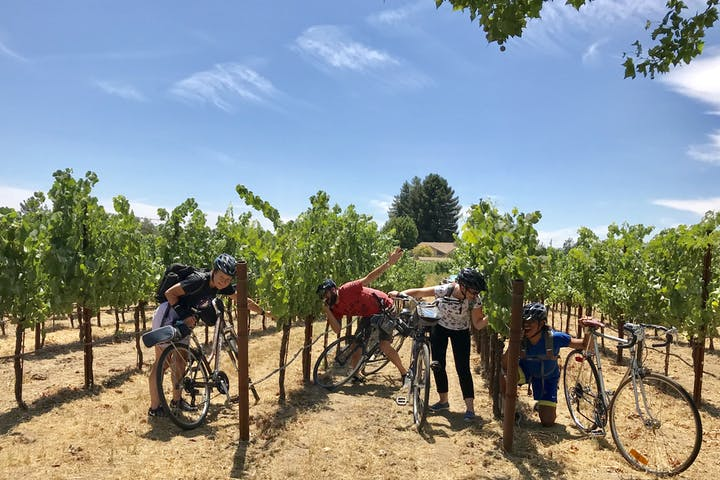 Group playing in a vineyard