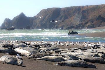 a seal on a rocky beach