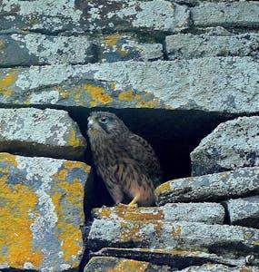 a bird sitting on a rock wall