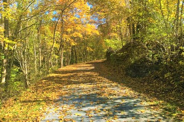 The scenic trail with trees on both sides
