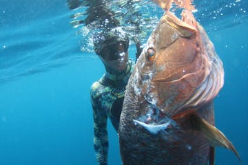 baja spearfishing adventures