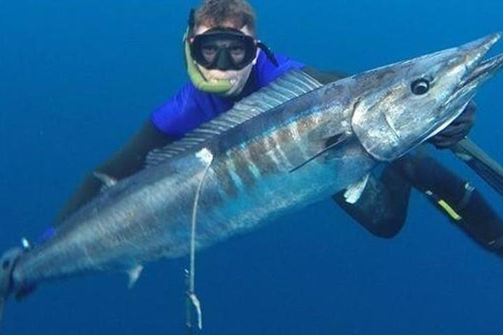 spearfishing cabo