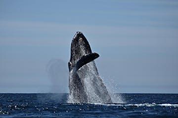 baja whale watching