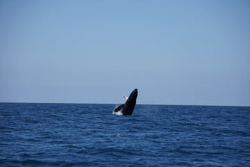 baja whale watching